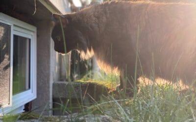 Do Homes in South Carolina Have Basements?